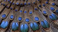 peacock by Maria Elena Lopez