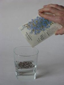 Imbibation, or giving your seeds a soak before you sow them.  It's not just for larger seeds but those little ones too.