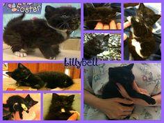 ASB Cat & Kitten Medical Expenses