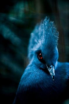 blue beauty w/a piercing eye!!! such wisdom in that look!!! animals have SO much more intelligence than we give them credit!!!