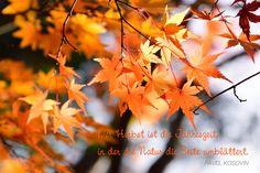 Der Herbst ist die Jahreszeit, in der die Natur die Seite umblättert.