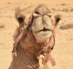 Looks like the camel I rode in Jericho 2000, on my 60th birthday!