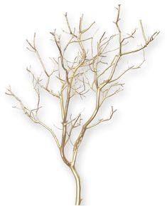 Natural, sandblasted manzanita branches for wedding centerpieces and events and floral displays. Daily discounts and seasonal specials on Manzanita centerpiece branches. Containers, filler and instructions for creating your own manzanita centerpieces. Manzanita Tree Centerpieces, Gold Wedding Centerpieces, Manzanita Branches, Centerpiece Decorations, Lighted Branches, Quinceanera Centerpieces, Spray Paint Vases, Branch Decor, Branch Art