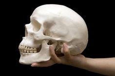 ¿Cuántos huesos tiene el cráneo?