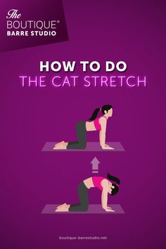 Cat Stretching, Barre, Stretches, Boutique, Studio, Movies, Movie Posters, Stretching, Thoughts