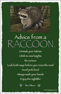 Spirit animal totem advice from a raccoon. Animal Spirit Guides, Spirit Animal, Animal Medicine, Power Animal, Animal Magic, Advice Quotes, Advice Cards, Wisdom Quotes, Life Quotes