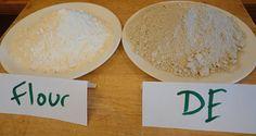Diatomaceous Earth (food grade): bug killer you can eat!