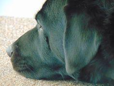 Alfie dog