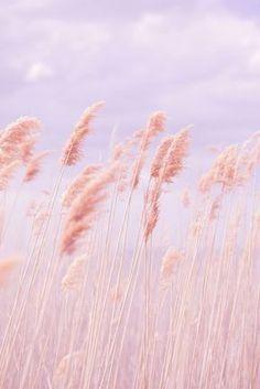 Fashion| Tendenze moda primavera-estate 2016: rose quartz, serenity | http://www.theglampepper.com/2016/03/11/14740/