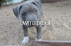 I love Cesar Millan and his pitbull Junior! Isn't he adorable! Blue Nose Pitbull, Blue Pits, Pitbull Pictures, Dog Whisperer, Cesar Millan, Pit Bull Love, Pitbull Terrier, Bull Terriers, Dogs And Puppies