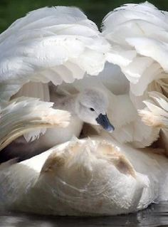 Pure is the these birth of being, as the wings of whiteness, opens to thee. Copy Deborah A. White