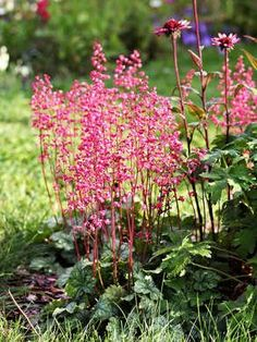 Don't make gardening more difficult than it needs to be! Plant these low-maintenance flowers and shrubs if you're new to gardening, have a brown thumb, or just want pretty plants without the work. Garden Shrubs, Garden Pests, Shade Garden, Garden Yard Ideas, Easy Garden, Herb Garden, Vegetable Garden, Potager Garden, Big Garden