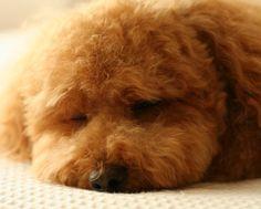 遊び疲れ。
