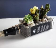 Jack Daniels Whiskey Bottle Cactus and Succulent - plants and edibles, naturalist home decor ideas