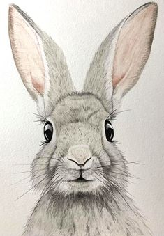 rabbit paintings on canvas Bunny Sketches, Animal Sketches, Art Drawings Sketches, Animal Drawings, Rabbit Drawing, Rabbit Art, Watercolor Animals, Watercolor Paintings, Watercolour