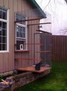 Outdoor cat enclosure, window exit
