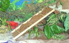 Turn a small ladder into a ramp for your hermit crabs! Get a small bird ladder from a pet shop. Measure the ladder against a piece of coconut fiber and cut the fiber to the width needed. Hermit Crab Cage, Hermit Crab Homes, Hermit Crab Habitat, Hermit Crabs, Small Birds, Pet Birds, Classroom Pets, Crab Decor, Crab House