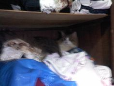 who's there, who's there??? oh kitty in the closet:x
