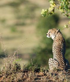 TAASA Private Reserve - Tanzania - African Safari in the Serengeti