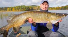 Watch this angler put a brute of a northern pike in the boat after it nailed a Westin Shad Teez. Trout Fishing, Fishing Boats, Fishing Lures, Pike Fishing Tips, Best Fishing, Fishing Humor, Fishing Shirts, Fishing In Canada, Drop Shot Rig