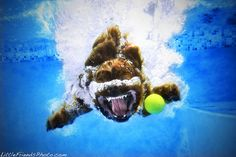 Funny Underwater Dogs by Seth Casteel