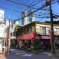 西新宿四丁目のフラワーショップここまでくると古い町並みを見ることができる電線のごちゃごちゃぶりも素晴らしい#flowershop #nishishinjuku #shinjuku #tokyo