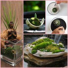 mini zen garten anlegen moos ideen   green luxury/ garden, Garten und bauen