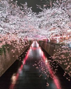 FullBlossom in Meguro River, Meguro,Tokyo,Japan. Nature Pictures, Cool Pictures, Beautiful Pictures, Beautiful Nature Wallpaper, Beautiful Landscapes, Wonderful Places, Beautiful Places, Road Photography, Anime Scenery
