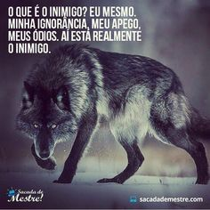 Lobo solitário Native American Animals, Where Is My Mind, Lone Wolf, Tumblr Wallpaper, Good Vibes, Positive Thoughts, Tatoos, Life Quotes, Cool Pictures