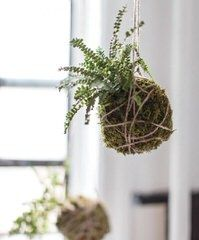 http://www.instyle.com/home-decorating/entertaining/kokedama-gallery