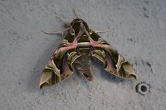 Butterfly by Halil Şafak on 500px