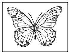 Families Program - Butterfly Voyage / Viaje  de las mariposas