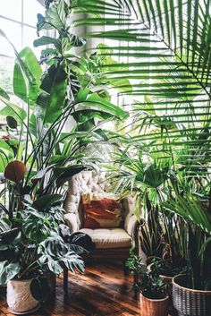 "While the idea of an urban jungle can sound overwhelming, ""Wild at Home"" helps plant lovers of all intensities navigate care and styling—whether they Botanical Interior, Interior Plants, Indoor Garden, Indoor Plants, Modern Greenhouses, Deco Nature, Living Vintage, Decoration Plante, Room With Plants"