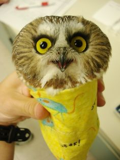 Not actually a burrito. | Community Post: 20 Owls That Can't Get Any Respect