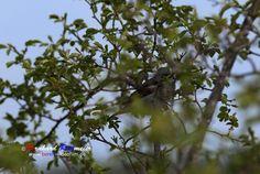 Gut getarnt! Hat etwas gedauert bis ich sie entdeckt habe Well camouflaged! Took a while until I found it #amsel #vögel #tierfotografie #birds #photography #fotografia #bereitvideofilm #bernhardreitmeier #natur www.bereit-videofilm.de https://plus.google.com/112007889895650114653/posts https://500px.com/BernhardReitmeier