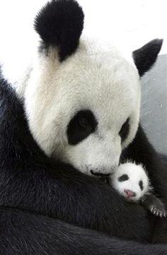 圓仔 and Mom