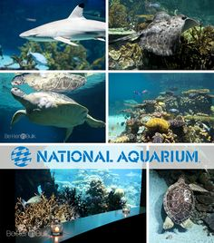 National Aquarium - Family Friendly Activities in Baltimore, Maryland