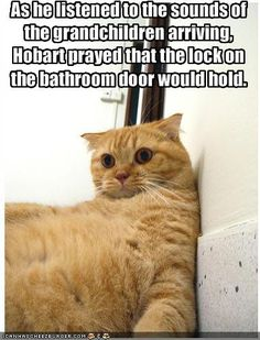 Funny quotes humor laughing so hard hilarious kitty 44 super Ideas Crazy Cats, I Love Cats, Cute Cats, Funny Kitties, Bad Cats, Adorable Kittens, Funny Animal Pictures, Funny Animals, Cute Animals