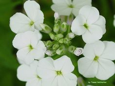 Wabash Wildflowers #7