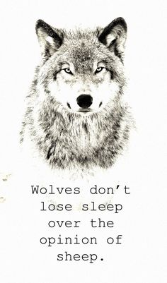 Wolves don't lose sleep over the opinion of sheep.