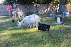 Decor Inspiration: Petting Zoo Sign