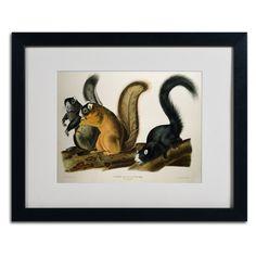 Fox Squirrel by John James Audubon Matted Framed Painting Print