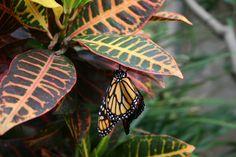 Butterfly lady's garden
