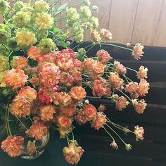 このお花#スプレーバラ なんです グリーンが #エクレール ピンクが #ラディッシュ という品種です post by #ashibe_lar #flower #flowers #rose #larbre #ラルブル