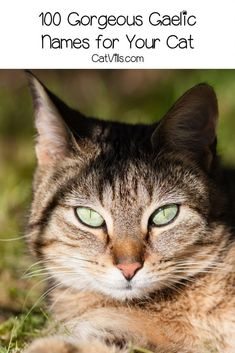 Looking for some gorgeous Gaelic cat names! Wait until you check out our top 100 favorites! We have plenty each for males and females, so take a look! Kitten Names Unique, Cute Cat Names, Girl Cat Names, Dog Names, Victorious Cat, Introducing A New Cat, Brown Cat, Outdoor Cats, Grey Cats