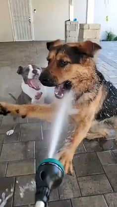 Cute Baby Dogs, Cute Funny Dogs, Cute Dogs And Puppies, Cute Funny Animals, Cutest Dogs, Doggies, Cute Animal Videos, Cute Animal Pictures, Funny Animal Jokes
