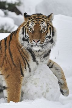 My ABSOLUTE FAV animal, I will have in Jah's Promised  New World as a backyard visitor!!