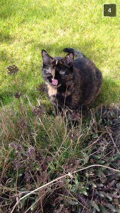 Indy. Tortoiseshell cat. Garden