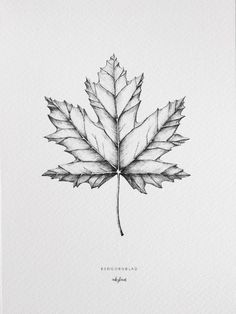 The maple leaf, create a cosy autumn feeling with this poster. High-quality digital print created from an original and hand-drawn illustration by inkylines. s hand drawn Plants - Maple leaf Drawing Faces, Drawing Sketches, Art Drawings, Pencil Drawings, Maple Leaf Tattoos, Herbst Tattoo, Leaves Sketch, Natur Tattoos, Realistic Eye Drawing
