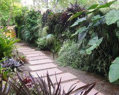 incrível jardim tropical plantas vista na parede galeria verde em um quintal lateral tropica . Patio Tropical, Tropical Garden Design, Home Garden Design, Tropical Landscaping, Modern Landscaping, Tropical Plants, Green Plants, Yard Design, Landscaping Design